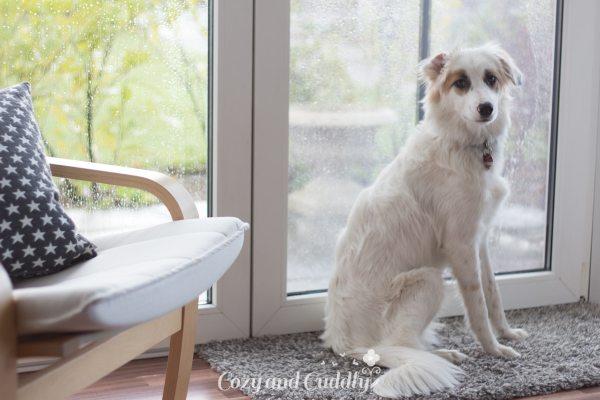 Hilfe für Mensch und Tier – Tierisch engagiert mit Fressnapf – Werbung