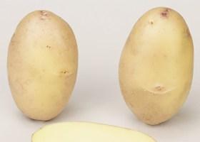 Cprêt Geffrault Pomme de Terre GALANTE de Paimpol