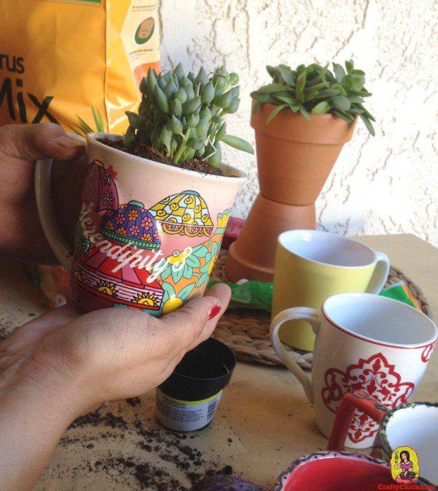 coffee-cup-succulentsB.jpg