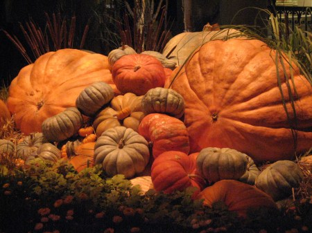The Bellagio Pumpkins