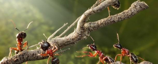 The Secret Life Of Ants Series