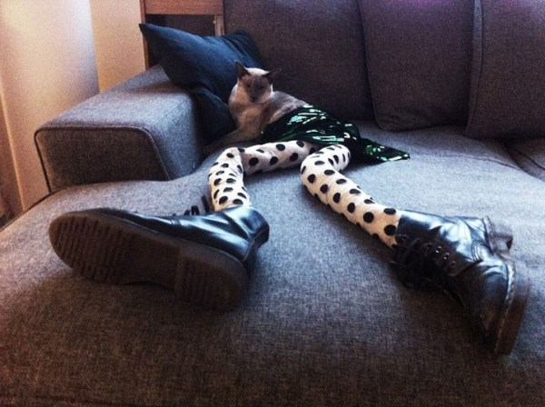 Cats_in_tights__2725511k