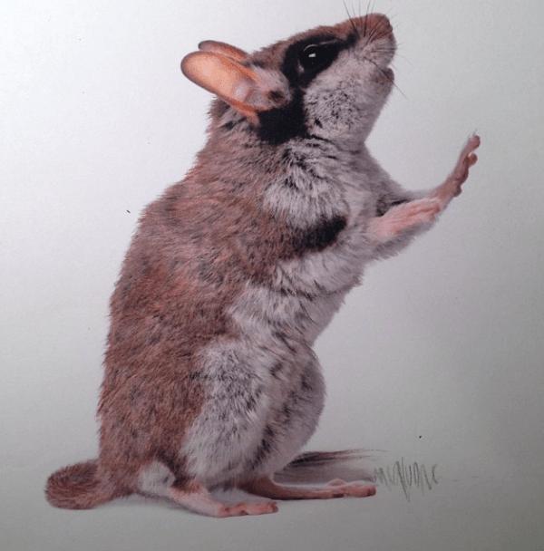 Karla-Mialynne-hyper-realistic-illustrations_03