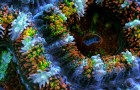 Slow Life: A Macro Timelapse of Coral, Sponges and Aquatic Organisms