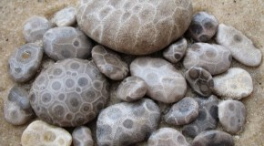 Amazing patterns: Michigan's Petoskey stones
