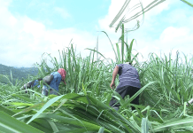 La Consejería Mayor del CRIC Respalda la Liberación de la Madre Tierra en el Norte del Cauca