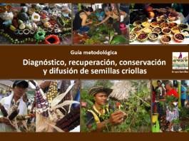 Comparten guía para el manejo de semillas criollas