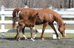 Chelsea's 2008 Filly
