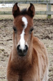 Filly by Dillon