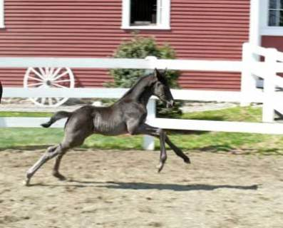 Filly (De Laurentis x Daniella)