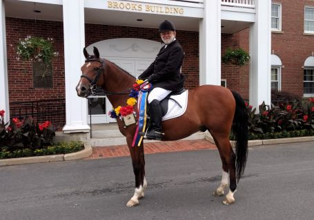 Khoncise+ - Third and Fourth Level Dressage Champion