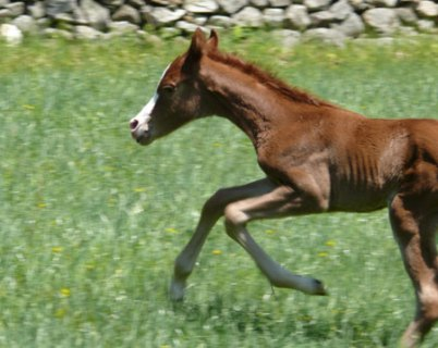 Khandle Filly