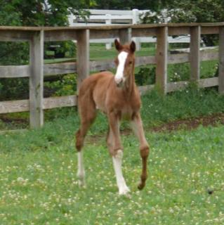 Lacey Filly Field