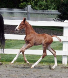 Lacey Filly, 2010