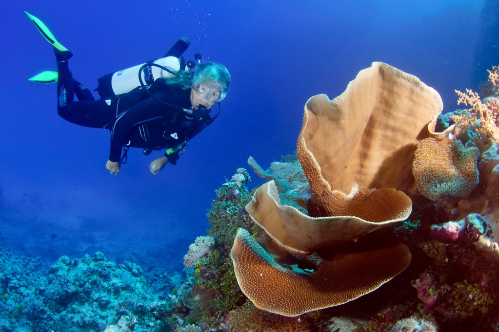 Willis islets diving