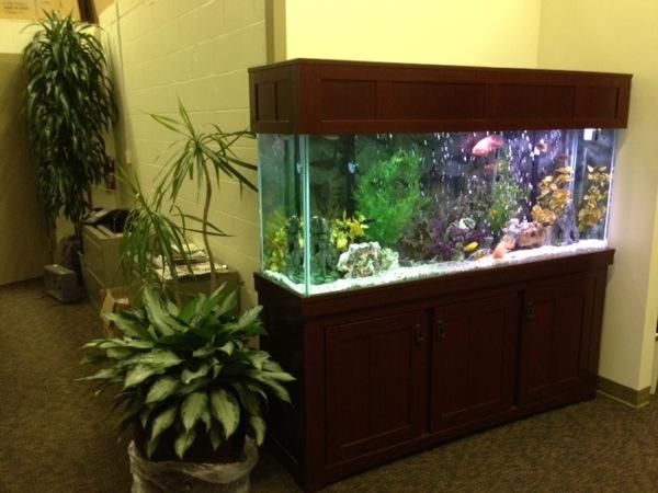 150 gallon aquarium Images   Frompo