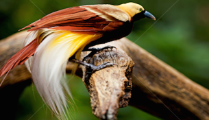 Tweet this! Check out our 'Bird Cred' with our bookshelf spotlight focusing on Southeast Asian avifauna.