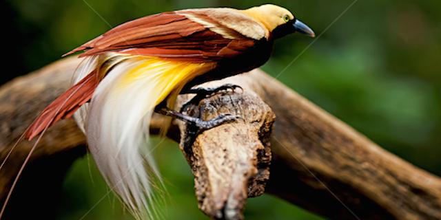 Birds of SE Asia Main