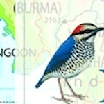 Birds of Southeast Asia by Craig Robson Icon