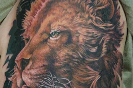 23 majestic lion