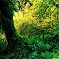 Lush Green World