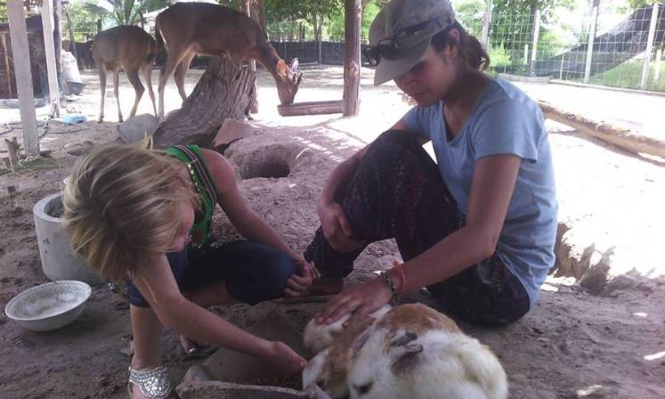 The little farm friendly project (2)