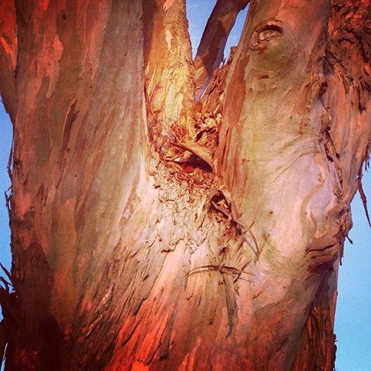mkr tree