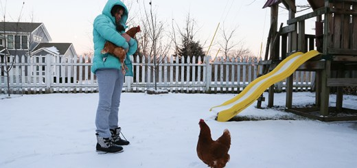 Samantha Ruffer holds one of the two chickens her family keeps as pets in their Zionsville backyard. (Photos by Ann Marie Shambaugh)
