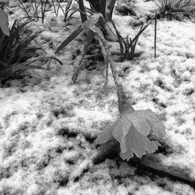 SnowMorning-pencil