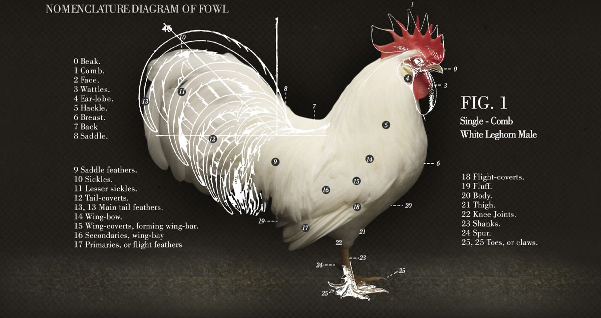 chicken-people-hat-mobile-bottom