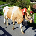 Party Cow