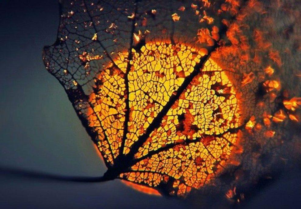 Warm autumn night's music
