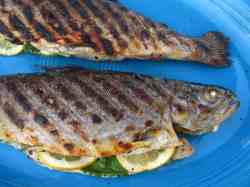 Stunning Citrus Stuffed Dadcooksdinner Grilled Sea Trout Recipes Grilled Trout Recipes Grilled Whole Trout Is A Recipe If You Prefer Mild Or Fish Witha Subtle My Grilled Herb Dill