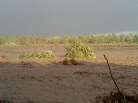 واحة سكورة :  نكبة طبيعية جديدة تطال الواحة بسبب الفيضانات الطارئة