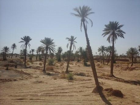 فــــزو بجماعة مصيسي: واحة تندثر، وفي حاجة ماسة إلى سدود تلية