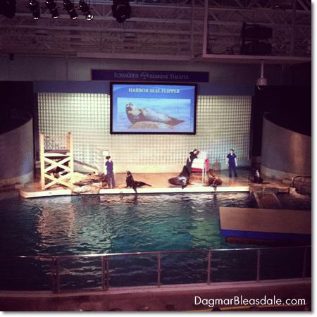 sea lion show at the Mystic Aquarium