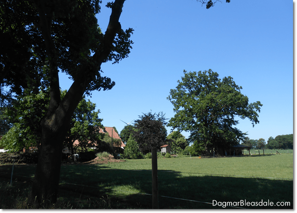 Farm in Germany, DagmarBleasdale.com