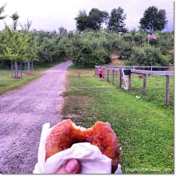 sugar donut, Harvest Moon farm, North Salem, NY