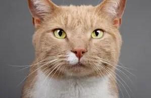 vito-vincent-the-cat