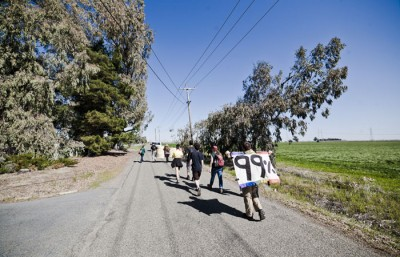 Marchers carrying signs and other belongings walk down a rural road on their way to UC David.