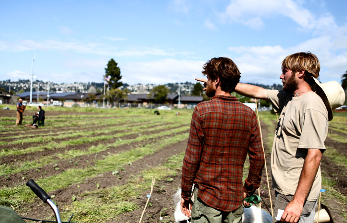 Occupy Cal and community members continue planting and tending to the farm they started on UC property.