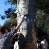 At Presentation Park, an attendee of Milanca Lopez's vigil adds a paper crane with a prayer written on it to many others hanging from the tree involved in the car accident.