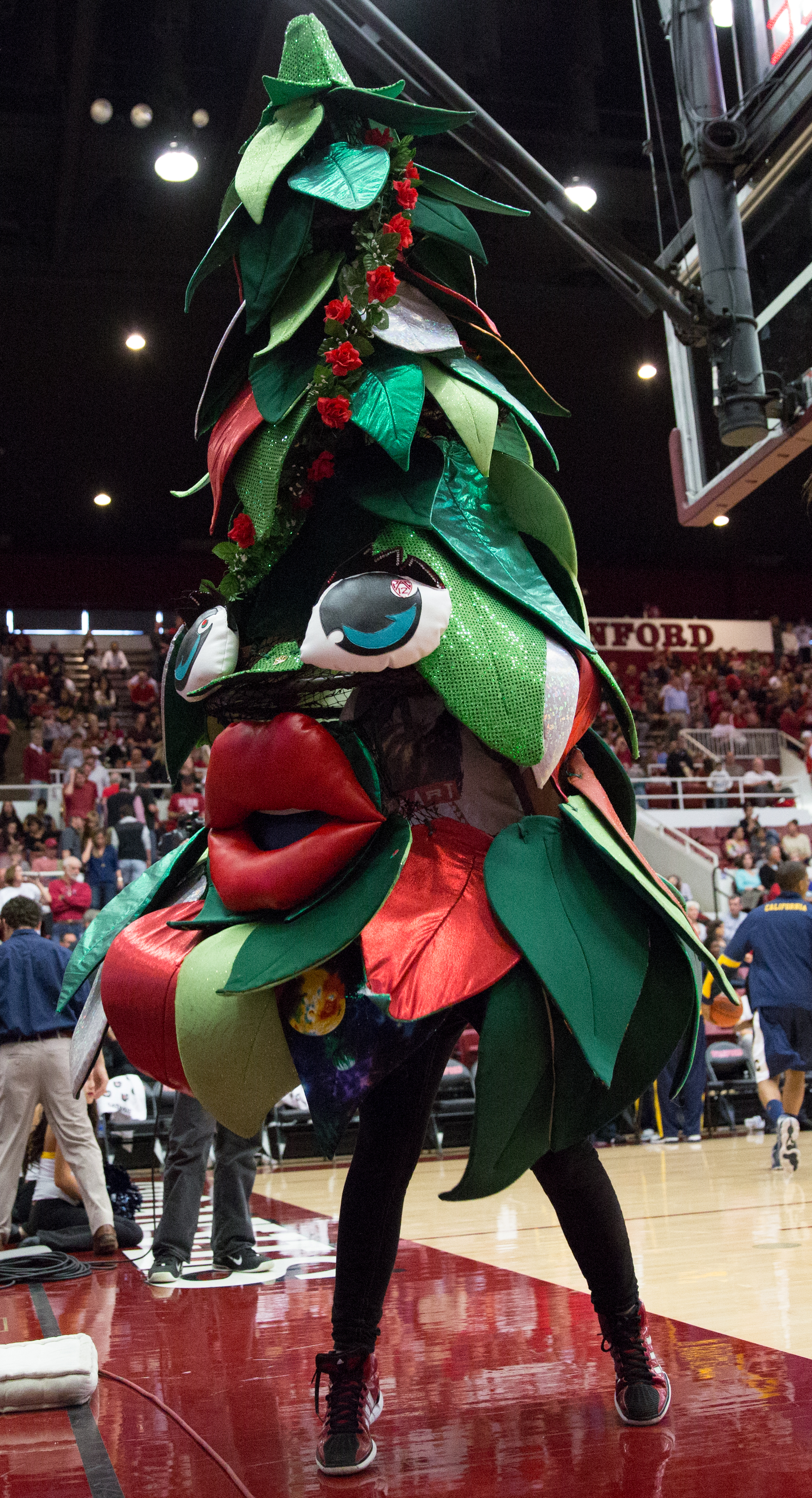 """The origins of Stanford's """"Tree"""" mascot 