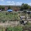 Fresh Organic Vegetables Sold at Wilmington's Urban Farm