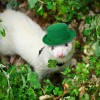 St.Patty's ferret