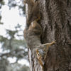 squirrel3_alangford_staff