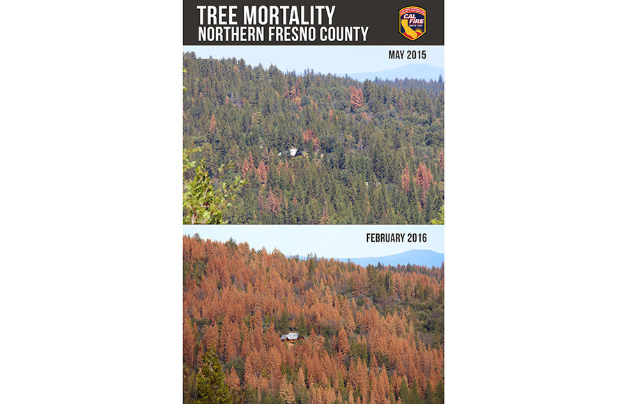 trees_cal_fire_courtesy
