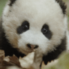 """Born in China"" 