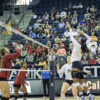 volleyball_zainabali_file-copy