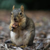 squirrels_jjordan_file